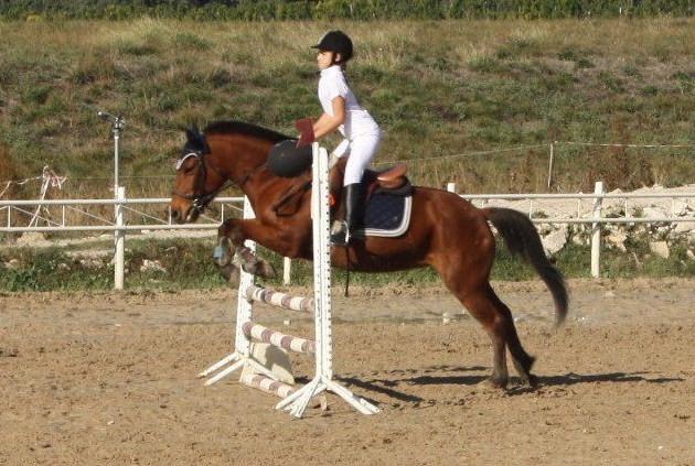 poney 4